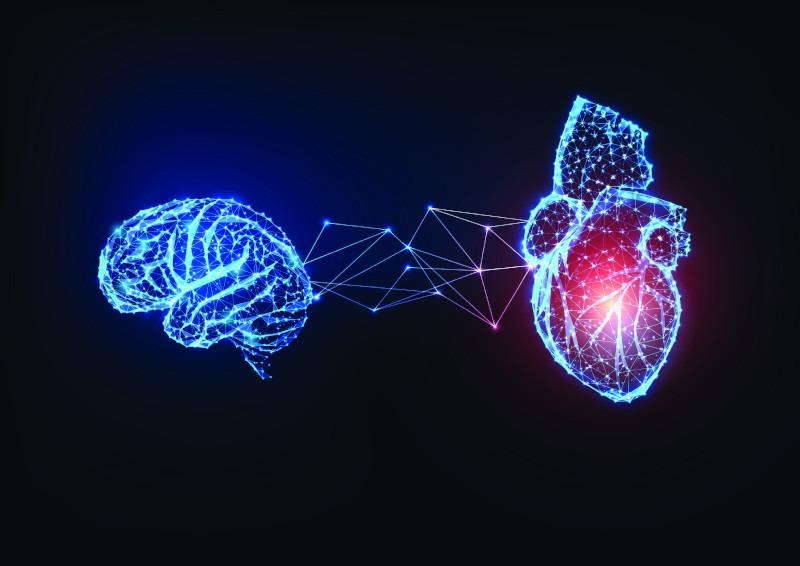 corazon-cerebro