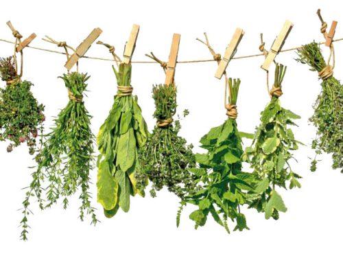 El poder de las plantas y sus usos